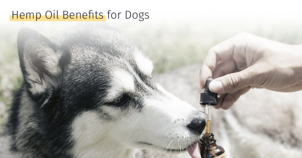 Hemp dog oil benefits for dogs CBD medrego