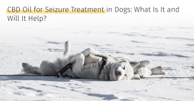 CBD oil for seizure treatment in dogs will it help what is it