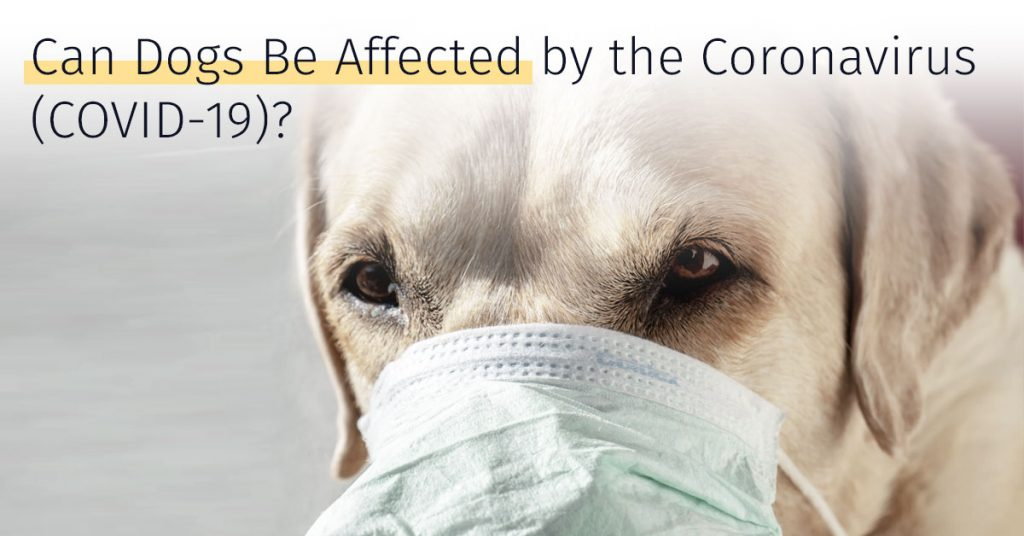 can coronavirus affect dogs, medrego, stem cell therapy