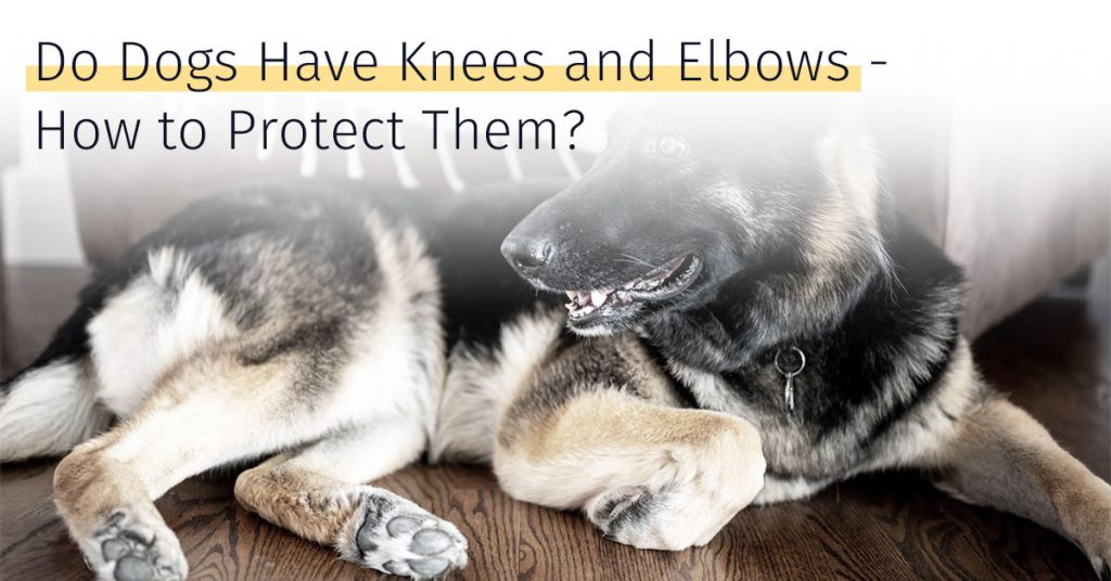 do dogs have knees and elbows, how to protect dog knees and elbows medrego stem cell therapy