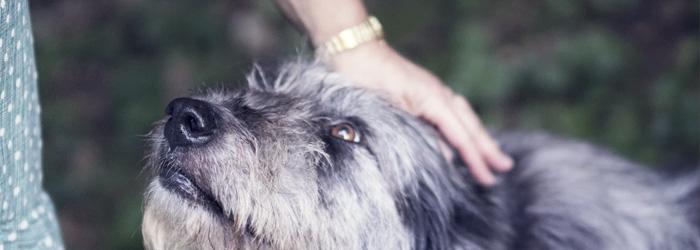 petting dogs with coronavirus gloves