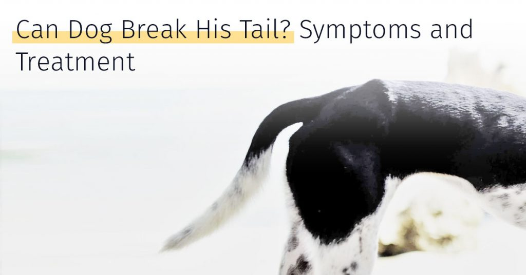 broken dog tail treatment