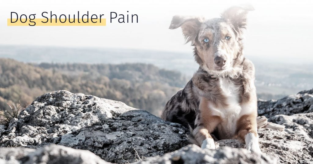 dog shoulder pain