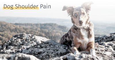 dog shoulder pain