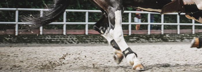 horse back legs hind limb