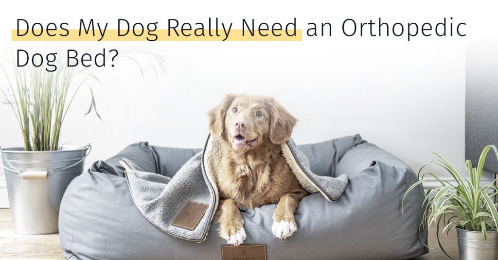 medrego orthopedic dog bed