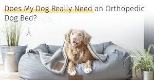 medrego orthopedic dog bed
