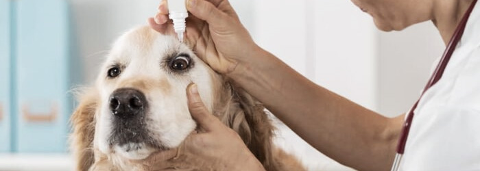 treating dry eye in dogs