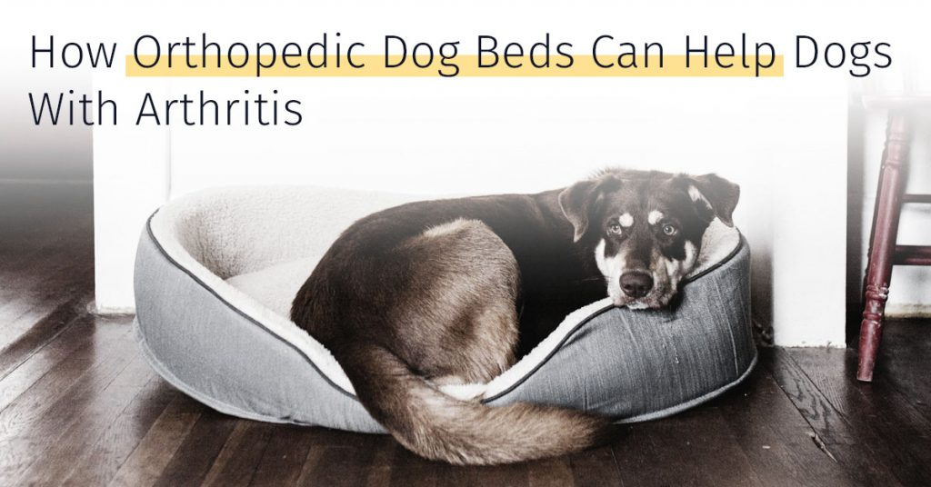 orthopedic dog beds can help dogs with arthritis