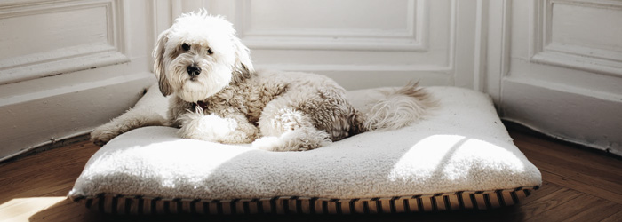 difference between orthopedic dog bed and regular dog bed