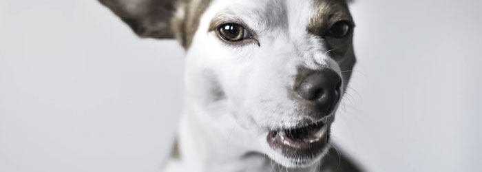 Bad breath in dogs licking butt