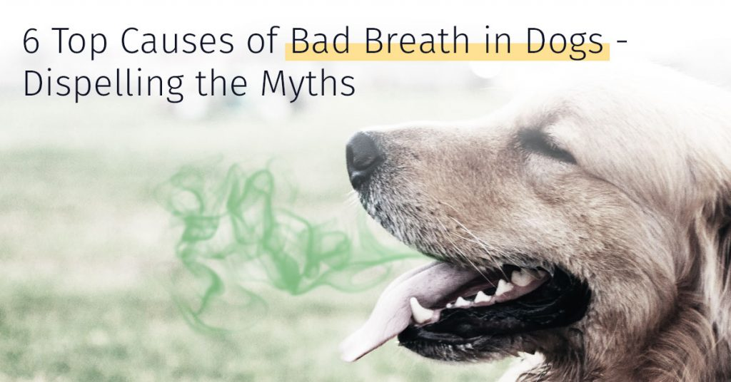 bad breath in dogs causes and solutions