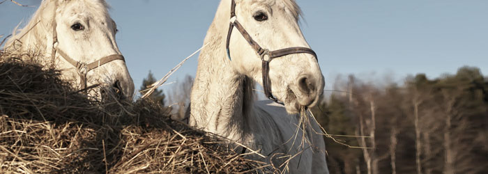 prevent horse ulcers