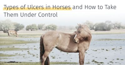types of ulcers in horses and how to treat them