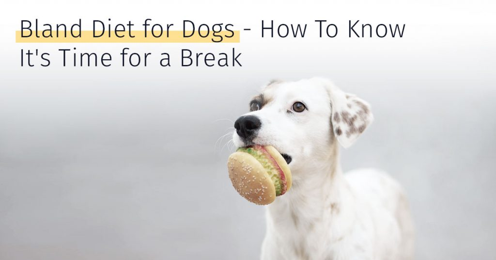 bland diet for dogs