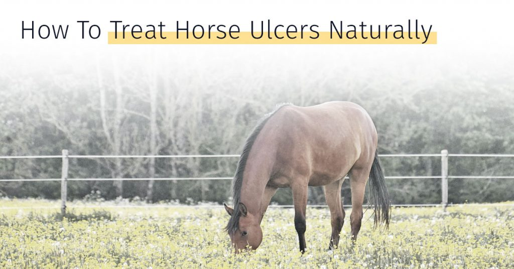 how to treat horse ulcers naturally