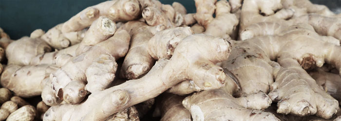 ginger for horse ulcers