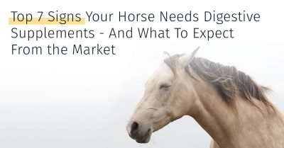 top 7 signs your horse needs digestive supplements
