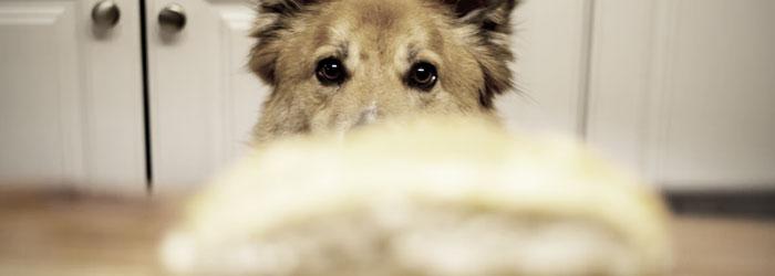 treatment for sensitive dog stomach